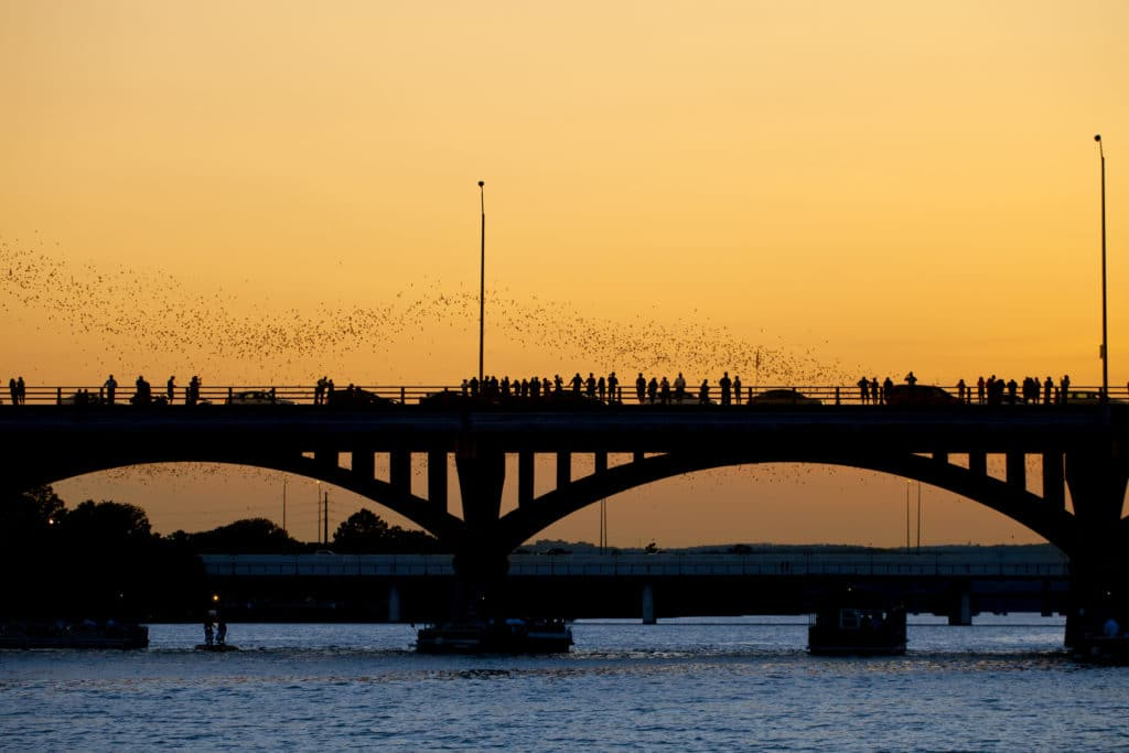 People watching bats leaving the Congress Ave bridge at sunset in Austin, Texas.