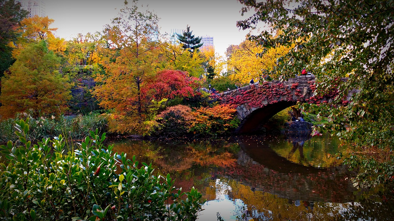 A bridge in Central Park in Autumn