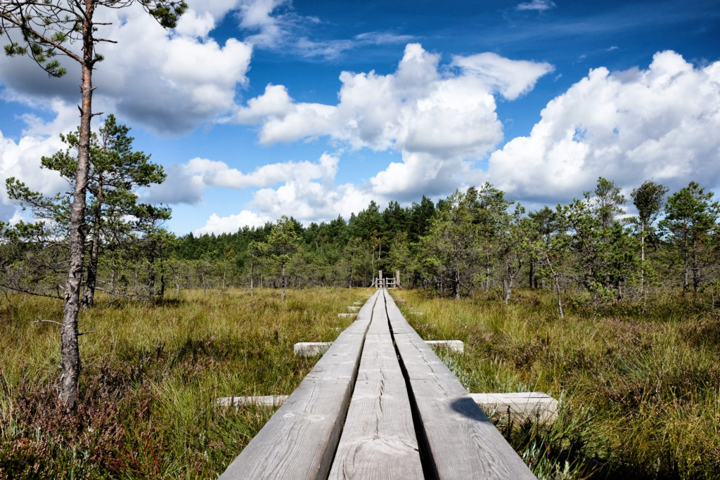 Panoramic view of a walking trail through the bog in Kemeri National Park, Latvia.
