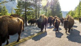 Billings to Yellowstone road trip
