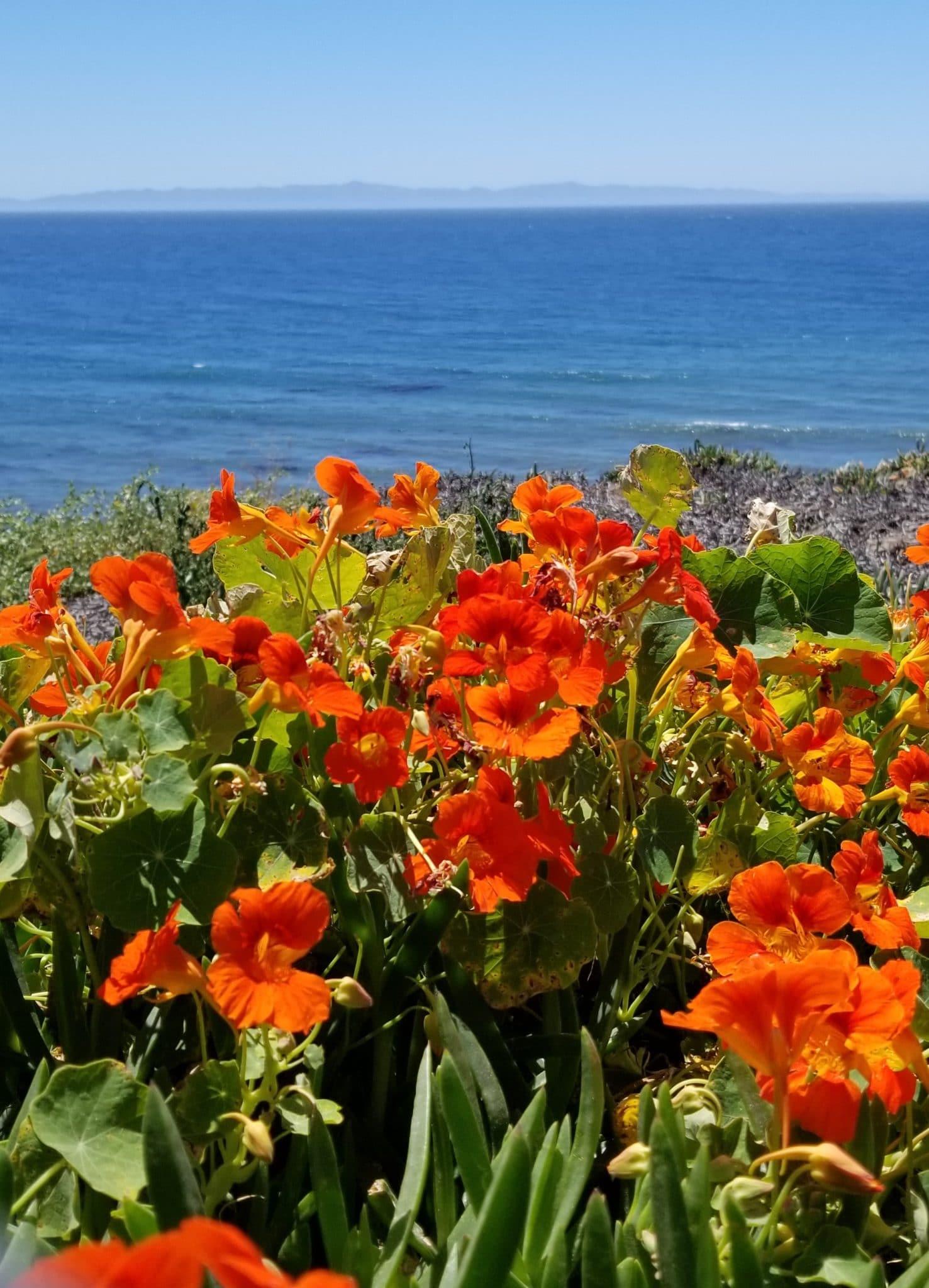 flowers in Santa Barbara