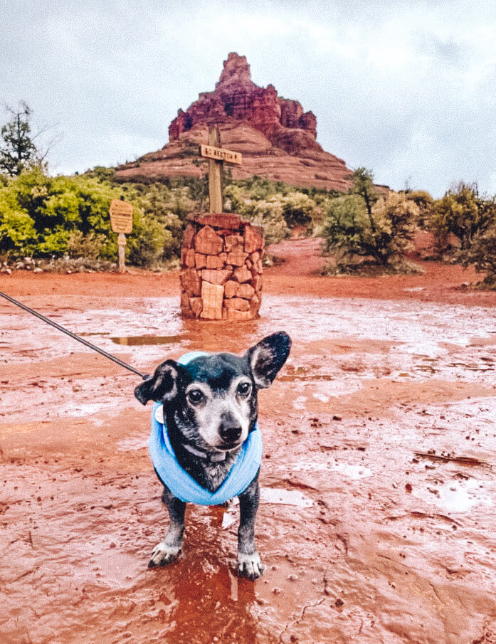 Melvin in Sedona in Winter
