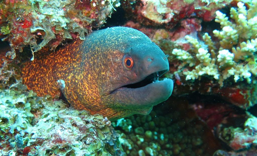 Hol Chan Marine Reserve - caye caulker belize snorkeling